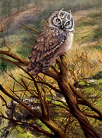 Owl on branch. Artist: Sarah Adams