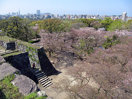 After a few days in Kumamoto, we returned to Fukuoka--and cherry blossom season was nearly over. This is Maizuru Park with the ruins of an old castle. The blossoms are falling, but there were still a lot of people picnicking on lawns cover with pink petals.