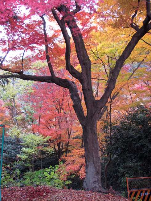 inari_shrine_foliage_1