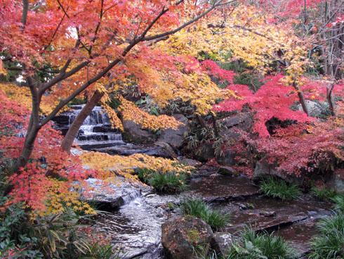 maples_in_himeji_garden