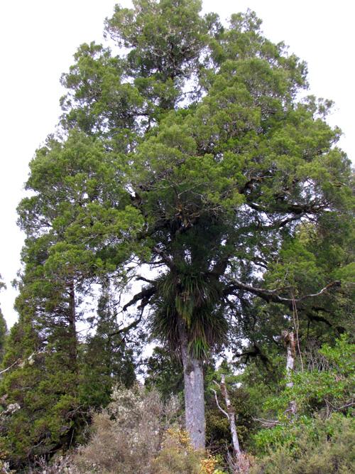 cypress_epiphytes
