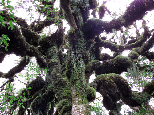 moss_and_epiphytes