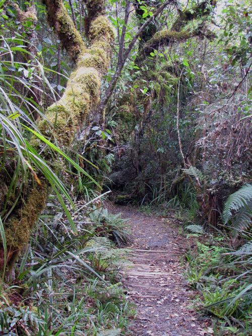 trail_mossy_tree