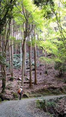 primeval_forest