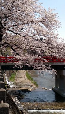 tree_and_bridge